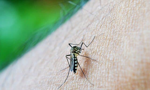 как да се предпазим от комари